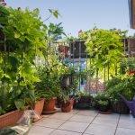 Der Balkon mit Privatsphäre – Sichtschutz mit Pflanzen