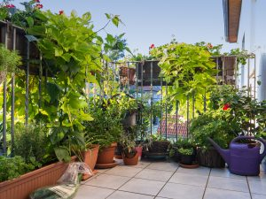 Sichtschutz Pflanzen für Balkon
