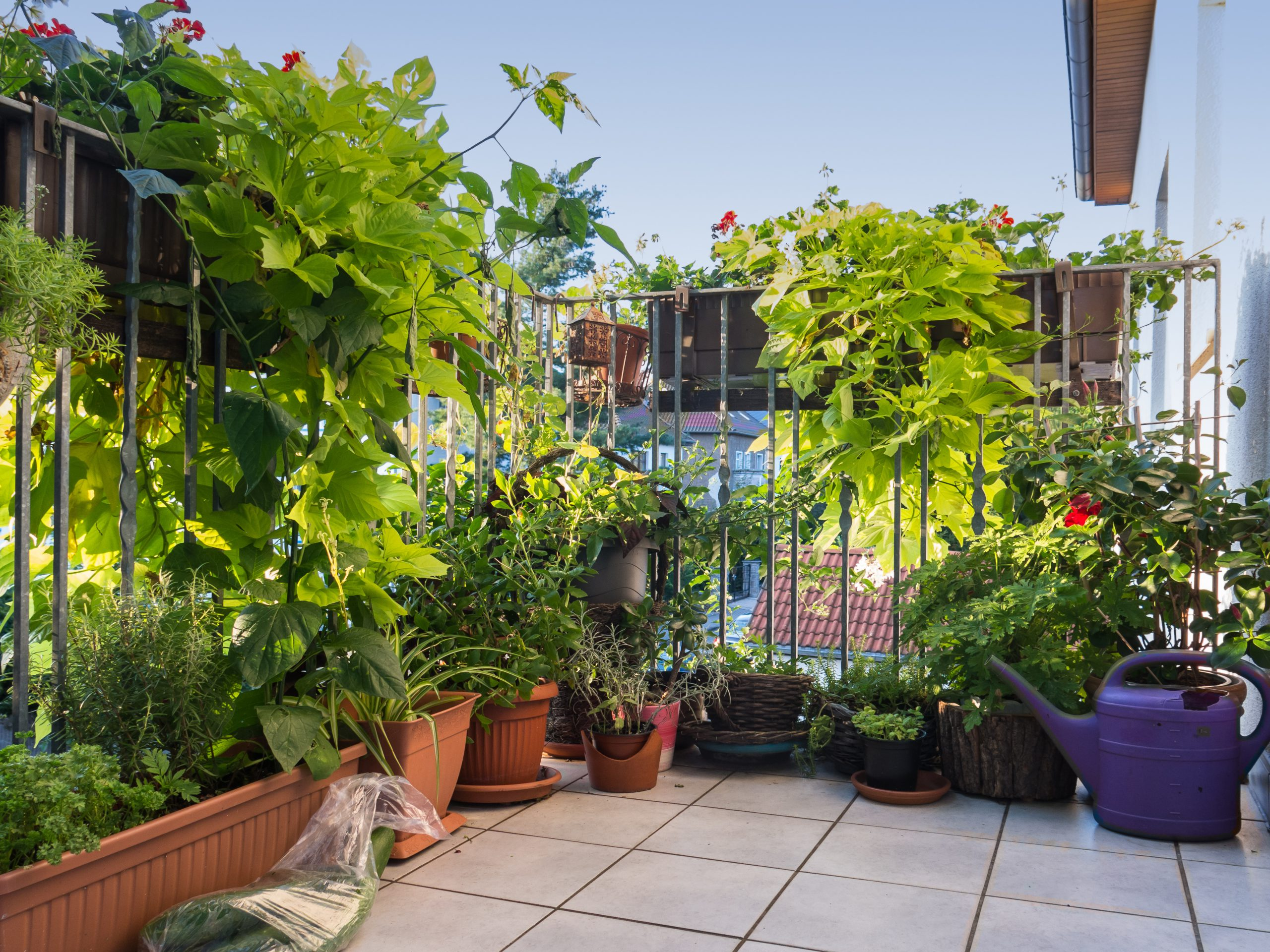 Der Ideale Balkon Sichtschutz Von Der Materialauswahl Bis Zur