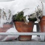 Winterharte Balkonpflanzen – damit auch in der kalten Jahreszeit gute Laune aufkommt