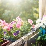 bunte Blumen auf dem Balkon