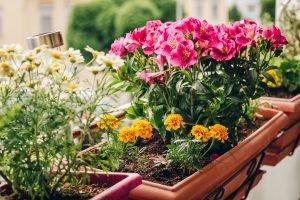 Blumen im Blumenkasten