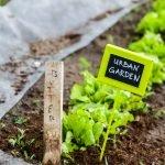 Urban Gardening – der Balkon als Anbaufläche für Selbstversorger