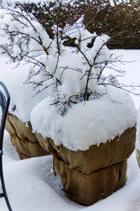 winter Pflanzen